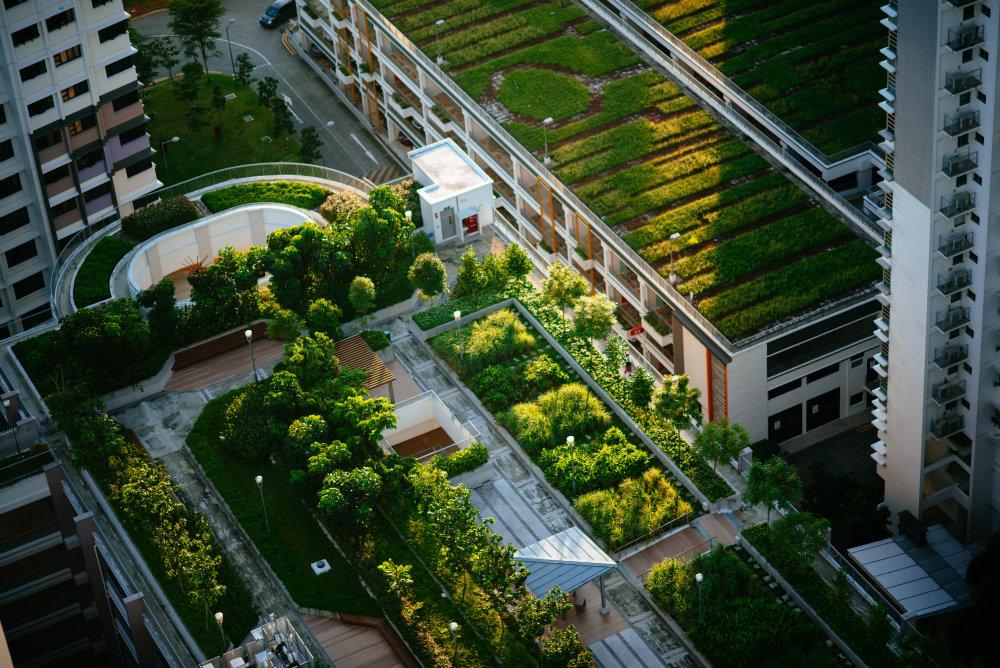 Sustentabilidade em casa: conheça medidas práticas para aplicar!